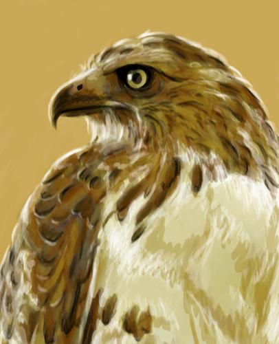 Hawk 500